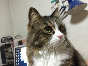 ネコちゃん占いのイメージ